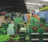 GFI - German Fresh Food Markets